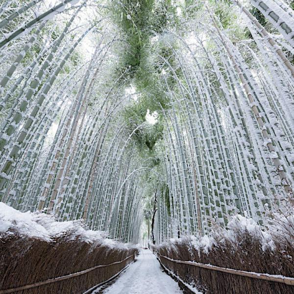Bambú Grove